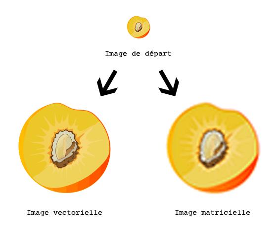 Explications des différences entre une image matricielle et une image vectorielle. Source image : www.baches-publicitaires.com